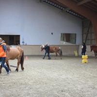 Führungskräfte-Training im Pferdespiegel 412
