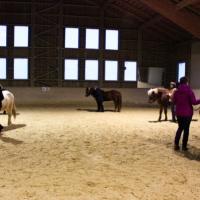 Führungskräfte-Training mit Pferden 119