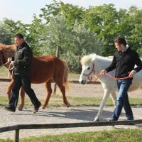 Führungskräfte-Training mit Pferden 512