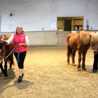 Führungskräfte-Training mit Pferden für Lehrlingsausbilder