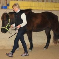 Intensiv-Training mit Pferden für Nachwuchsführungskräfte