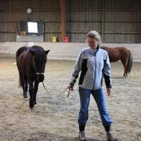 Schnupper-Workshop Pferdetraining