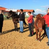 Schnupper-Workshop Pferdetraining 413